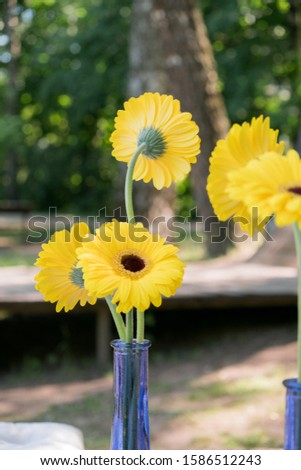 A picnic decoration on nature is a blue vase with yellow calendula flowers. Foto stock ©