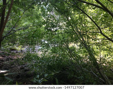 A picture from the low bushy trees and overgrowth growing directly beside and around the pond in Davis Creek Park