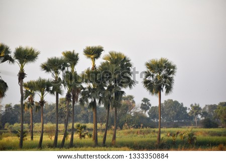 A picture of a beautiful jungle where Some palm trees in the skyscraper standing #1333350884
