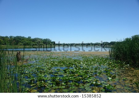 A picture of a beautiful lake with lilly pads
