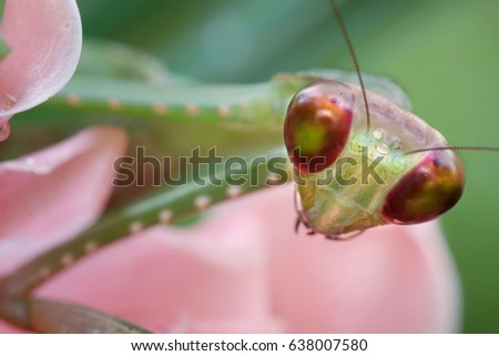 A picture of a beautiful mantis