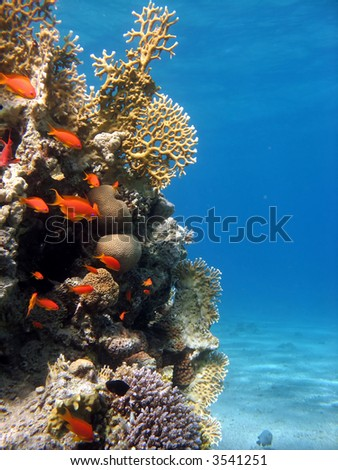 A picture of a coral reef teeming with life. shot in the Red Sea stock photo