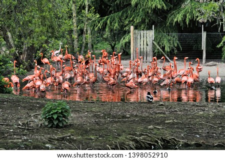 A picture of a flock of Flamingo's #1398052910
