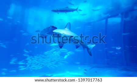 a picture of a hammerhead swimming in the water, dynamic hammerhead swimming with shoals of fish #1397017763