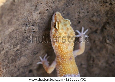 A picture of a leopard gecko took with a cork bark for background