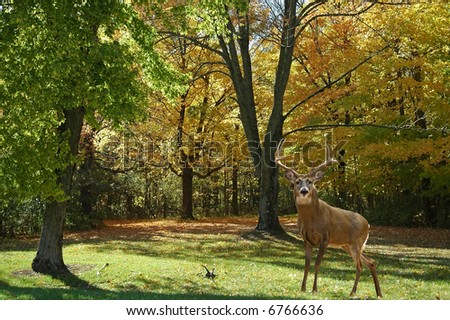 a picture of a mature buck taken in a state forest in indiana