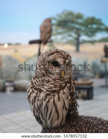 a picture of a owl in a park