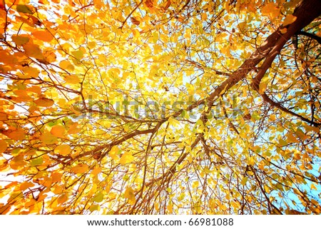 A picture of a tree with yellow leaves which is a perfect background