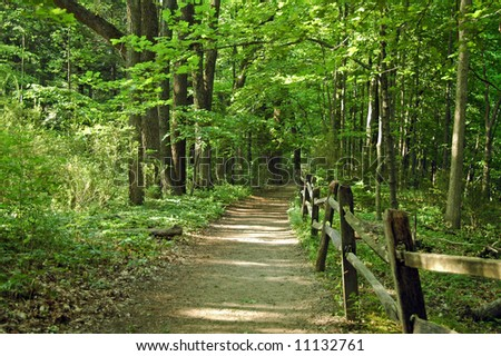 A picture of a walking path through the woods in a forest in Indiana