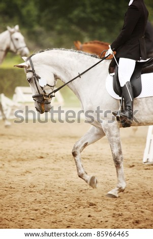 A picture of an equestrian on a white horse in motion over natural background