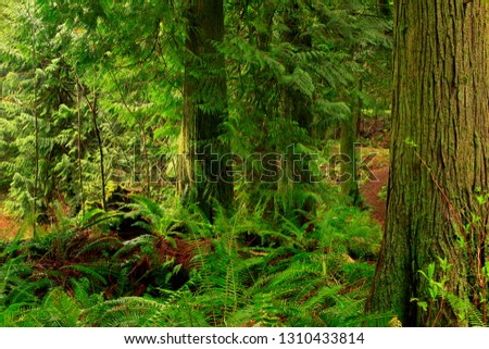 a picture of an exterior Pacific Northwest forest #1310433814