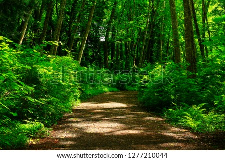 a picture of an exterior Pacific Northwest forest hiking trail #1277210044