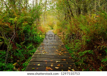 a picture of an exterior Pacific Northwest forest hiking trail #1297510753