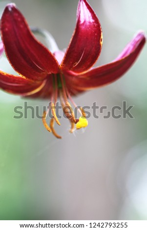 a picture of beautiful, elky lilies