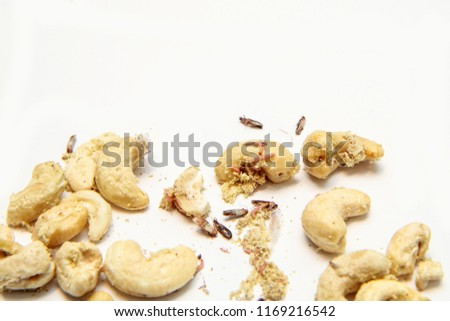 A picture of cashew nuts infested with caterpillars and butterflies of the meal moth. Isolated on a white background.