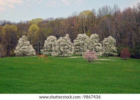 A picture of cherry and magnolia blossoms with doe and fawn