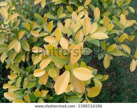 A picture of green plants