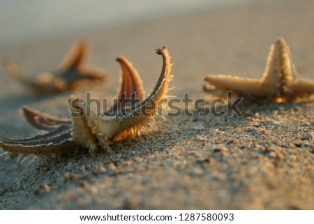 A picture of starfish on the seashore