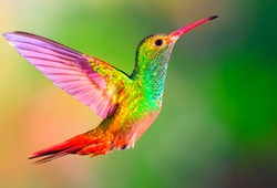 A picture of the beautiful view of humming bird