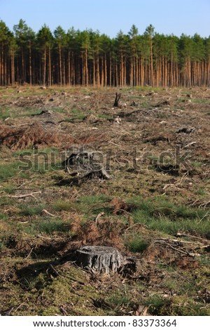 A picture of tree stumps and green forest in the background