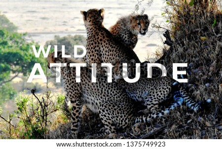 A picture of word wild attitude with a bunch of leopards.