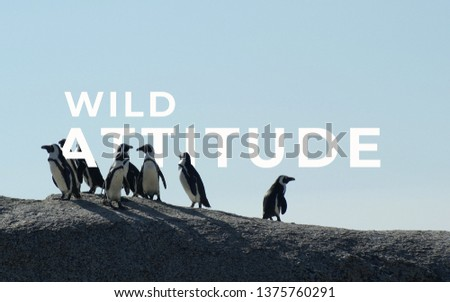 A picture of word wild attitude with a group of penguins.