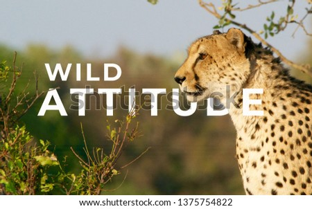 A picture of word wild attitude with a leopard.