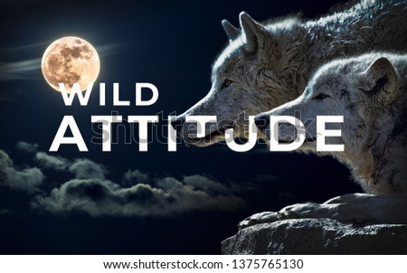 A picture of word wild attitude with two wolves.