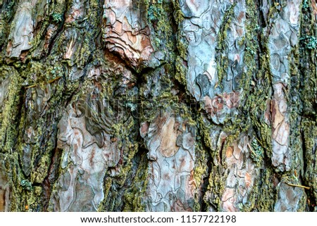 A picture texture of the bark of a tree similar to camouflage