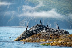 A picturesque morning with cormorants and seals on the rocky shores of the sea of Japan