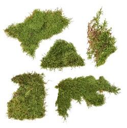 a piece of green moss