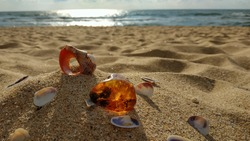 A piece of natural raw amber and shells, large and small, are scattered on the sand against the sea. Inside the amber there is an ancient plant that is millions of years old. The early morning hours.