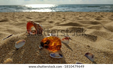 A piece of natural raw amber and shells, large and small, are scattered on the sand against the sea. Inside the amber there is an ancient plant that is millions of years old. The early morning hours.  Сток-фото ©