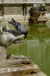 a pigeon drinking water from a fountain where the water flows into the mouth of a concrete dog