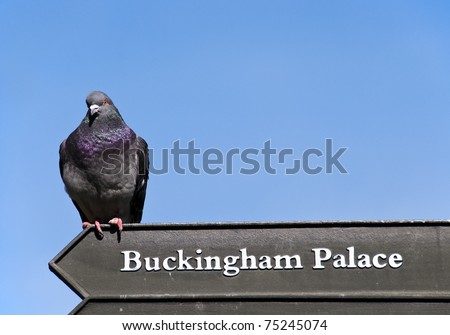 A pigeon on a Buckingham Palace sign, London, UK