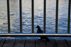 A pigeon perched on a wooden dock with metal fences surrounded by water under the sunlight