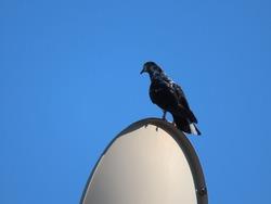 A pigeon watching its friends on an antenna.