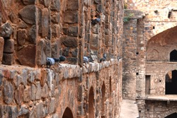 A Pigion settlement - Pigion In makes its own settlement in old fort- A pic from Historic Stepwells, Agrasen ki Baoli in New Delhi, India