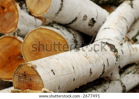 A pile of birch logs - shallow depth of field
