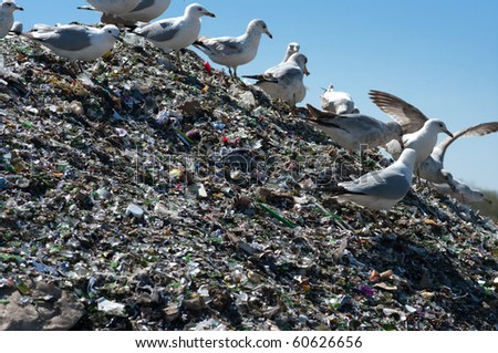 A pile of broken glass and trash in a landfill with birds looking for food