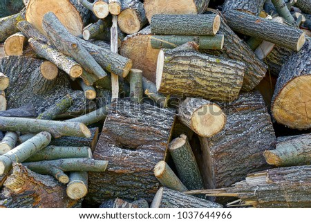 A pile of brown firewood and logs in the yard #1037644966