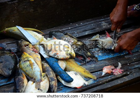 Shutterstock A pile of colorful amazonian fish waiting to be cleaned and prepared for cooking