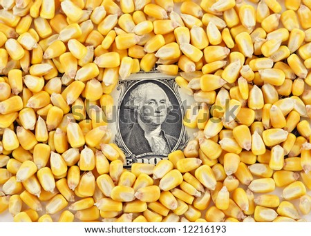 A pile of corn kernels with a dollar bill showing through the center