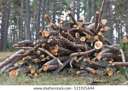 A pile of cut firewood.