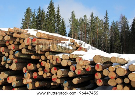 A pile of cut, snow topped softwood logs with spruce trees and blue sky on the background.