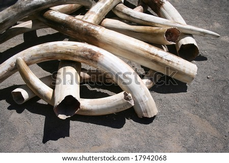 A pile of ivory tusks