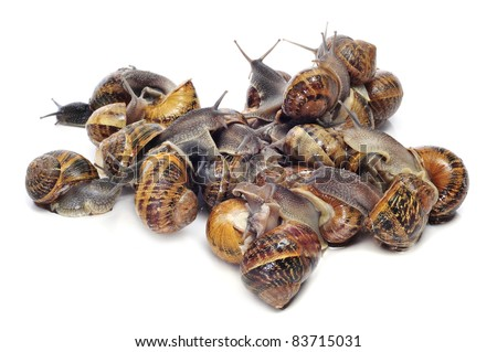a pile of land snails on a white background