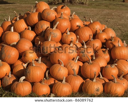 a pile of picked pumpkins ready for sale at a local farm
