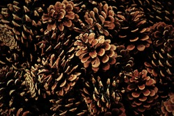 A pile of pinecones in winter