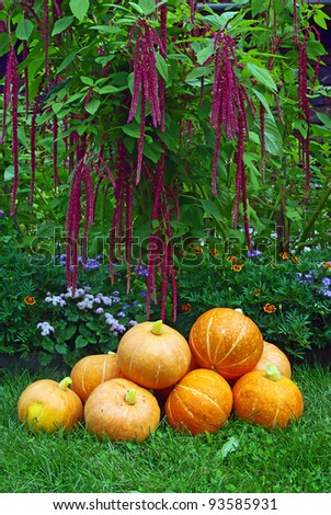 A pile of pumpkins on red amaranth plant background